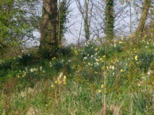 UK Woodland
