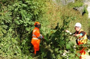 Government Sets out Strategy for Biodiverse Railway Lineside